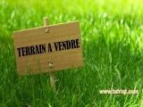 un grand terrain a boudjlida a vendre - Tlemcen